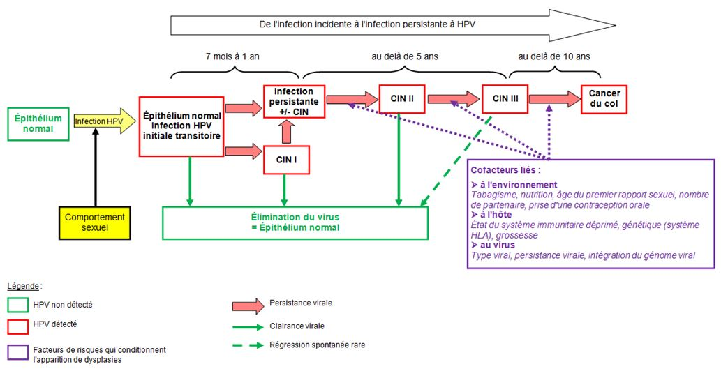 Papillomavirus chez l homme traitement