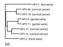 hpv type for warts