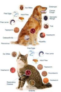 tipuri de paraziti externi hpv impfung sinnvoll