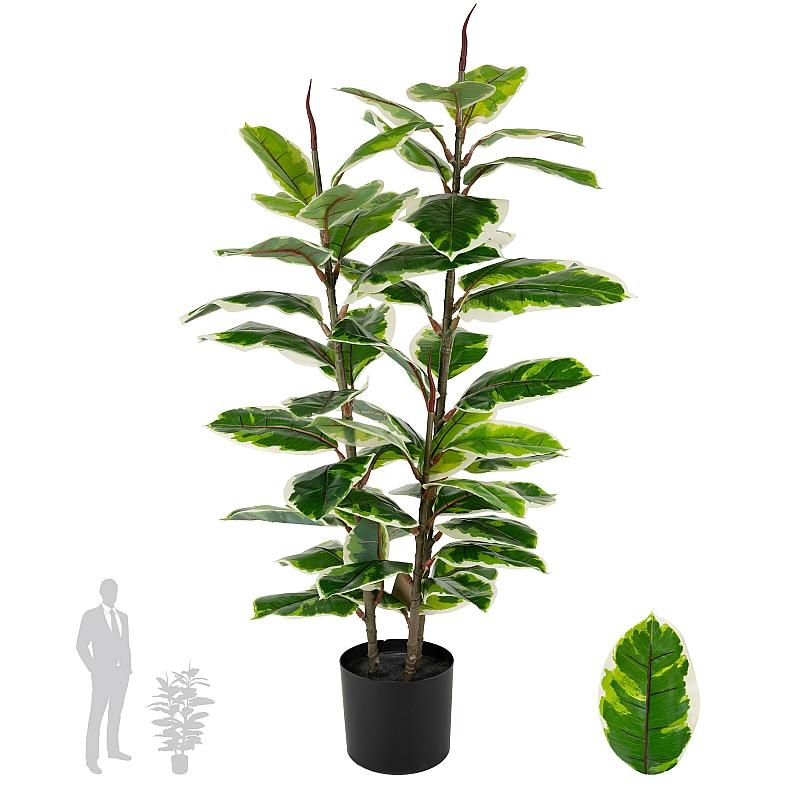 Plante decorative cu frunze