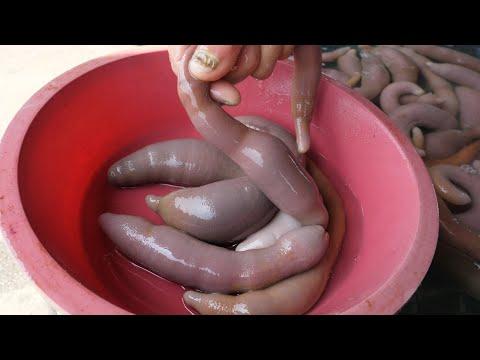preparate pentru viermi și tenă