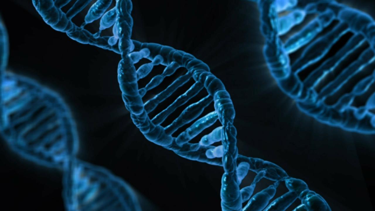 cancerul gastric plan de ingrijire tratamentul paraziților de ciul