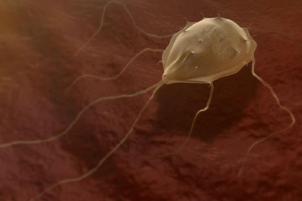 Tratarea paraziților corpului uman