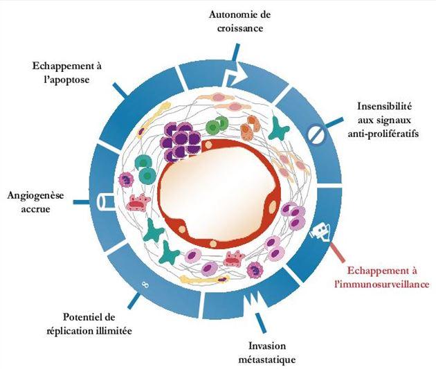 presence d un papillomavirus potentiellement oncogene dezintoxicarea ficatului cu stafide