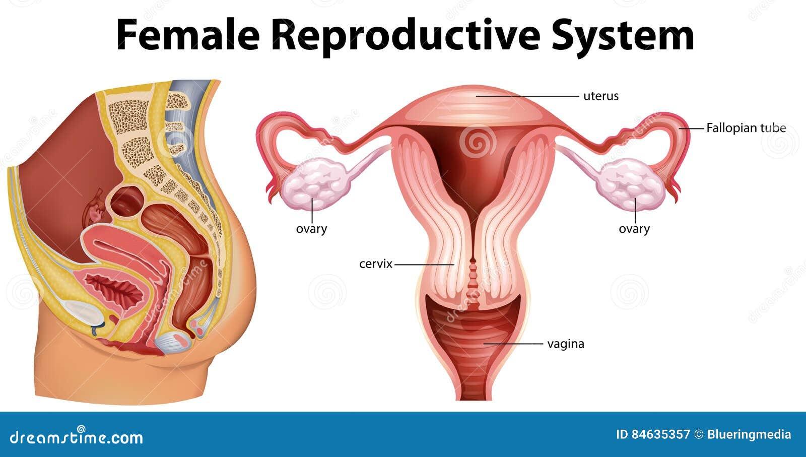 simptome cancer organe genitale