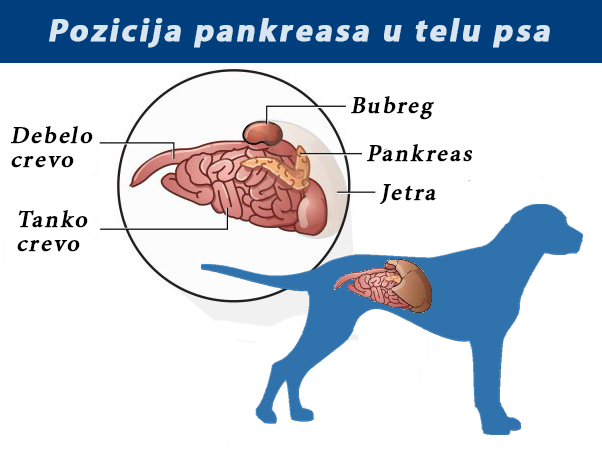 Parazita kod pasa simptomi, Furazolidon parazit recenzije