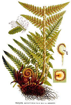 Plante Si Ierburi Medicinale