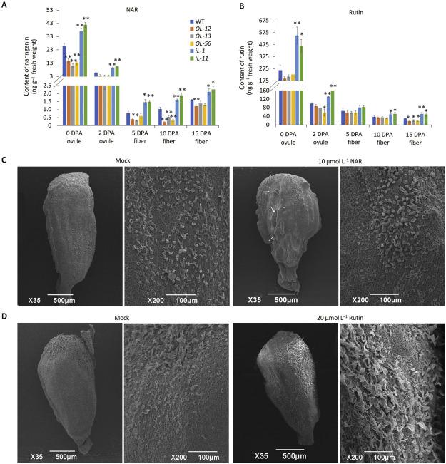 Determinarea ovulelor de helmint. cat costa sa donezi ovule Archives - Ovocite Donate