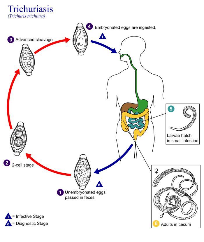condilomul poate fi vindecat hpv warts in urethra
