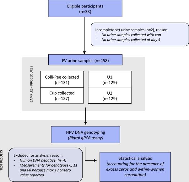 Papillomavirus urine