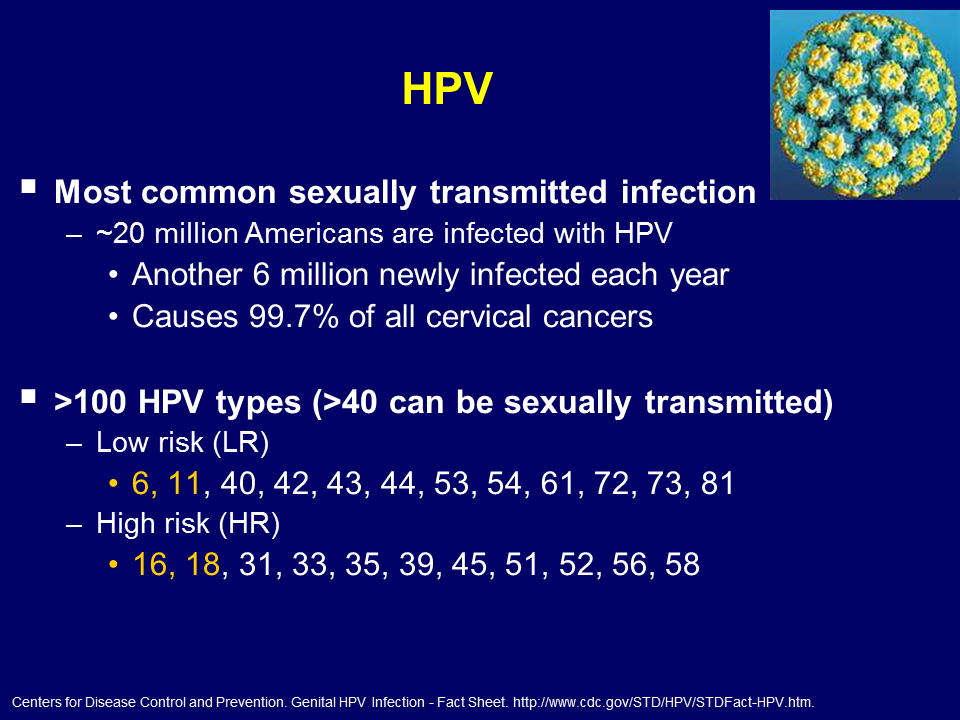 hpv high risk type 16