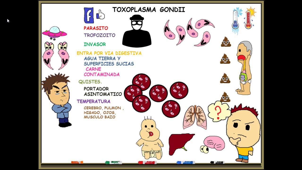 toxoplasma gondii igg pozitiv