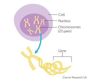 Pancreatic cancer genetic, Pancreatic cancer genetic link. Cancer pancreatic