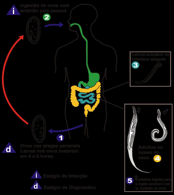 cancer genital feminin symptome tratament pentru ochi pentru paraziți