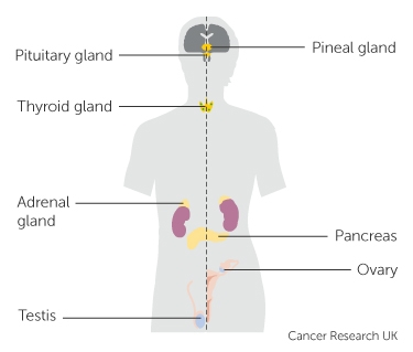 Cancer hormonal agents.