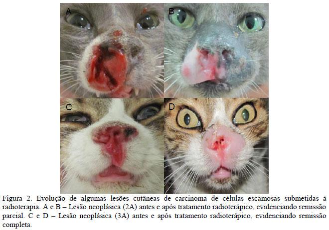 Cancer bucal en gatos. Tumores y Metástasis cerebrales jak na parazity v tele