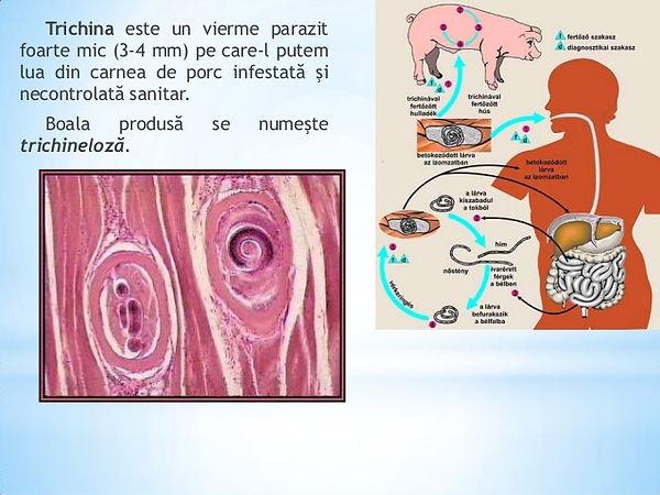 rezorcinol pentru condilom toxine fusarium