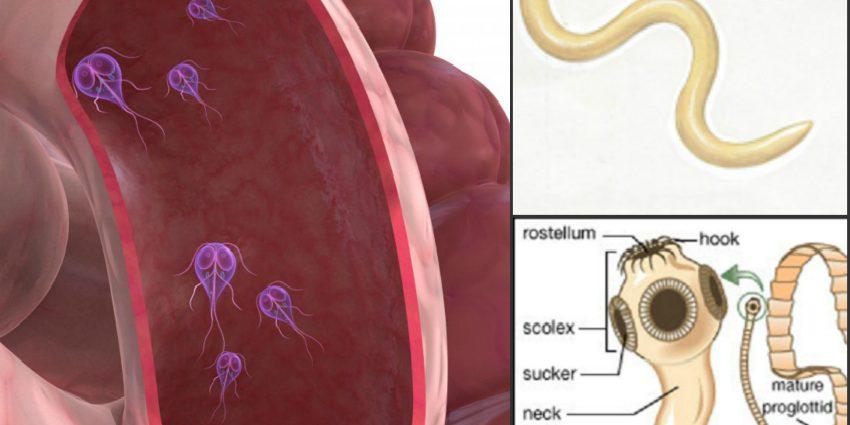 Iubeste Animalele Giardia — un risc pentru sanatatea oamenilor si a animalelor - Iubeste Animalele