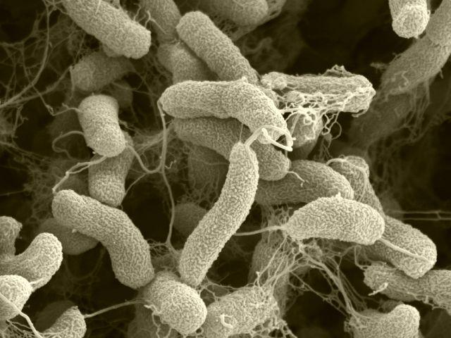 Care sunt Archaea?