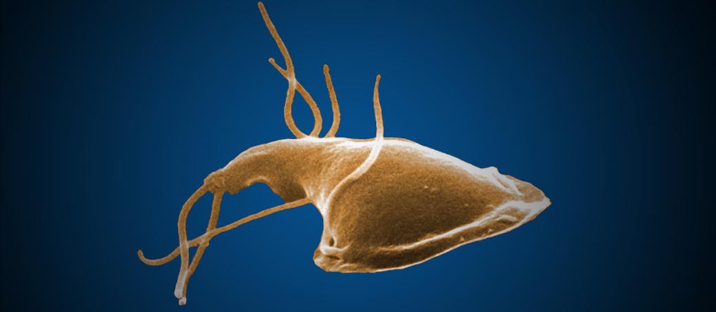 parasiet giardia bebe