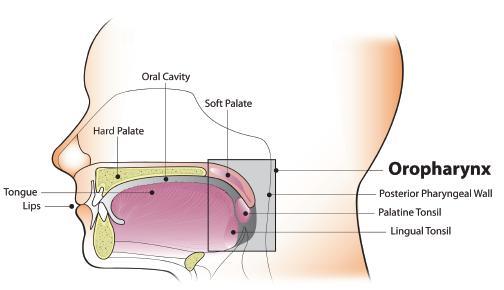 papilloma virus trasmissione tra donne