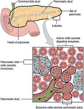 Exocrine Pancreatic Cancer Citește carte - Citiți cărți în FB2