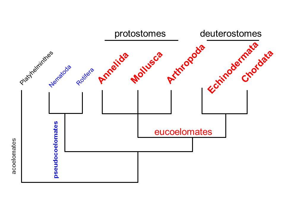 Nematode annelida platyhelminthes Reacții adverse ale suplimentelor de detoxifiere hepatică