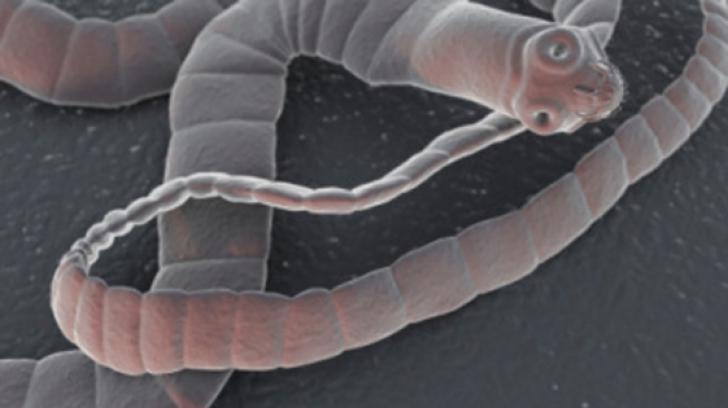 semne ale viermei rotunde din corpul uman