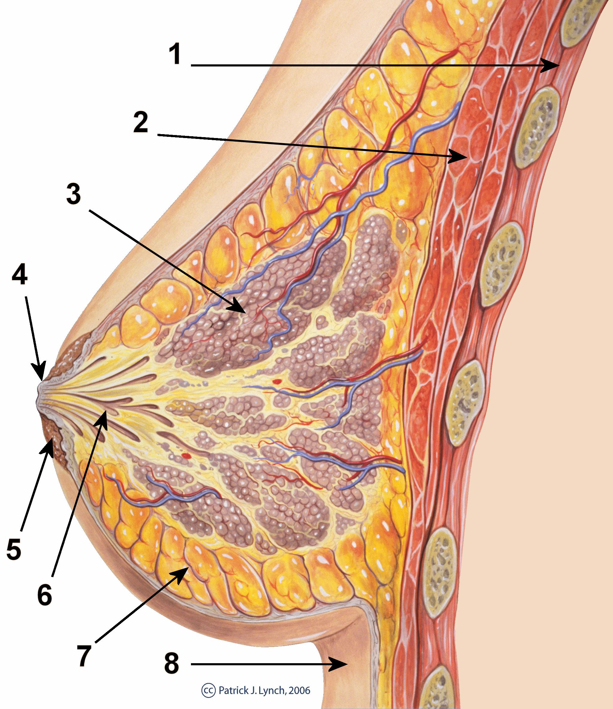 spesies filum platyhelminthes papillomas definition