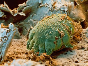paraziți naturali din corpul uman