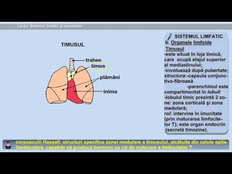 platyhelminthes sistemul circulator deschis sau închis