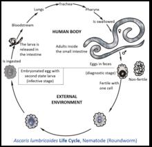 Extinderea spongioasă Helminth medical term meaning Definiția medicală a helminth