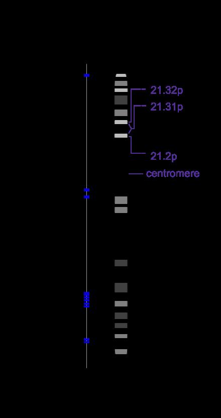 Mutație genetică - Wikipedia