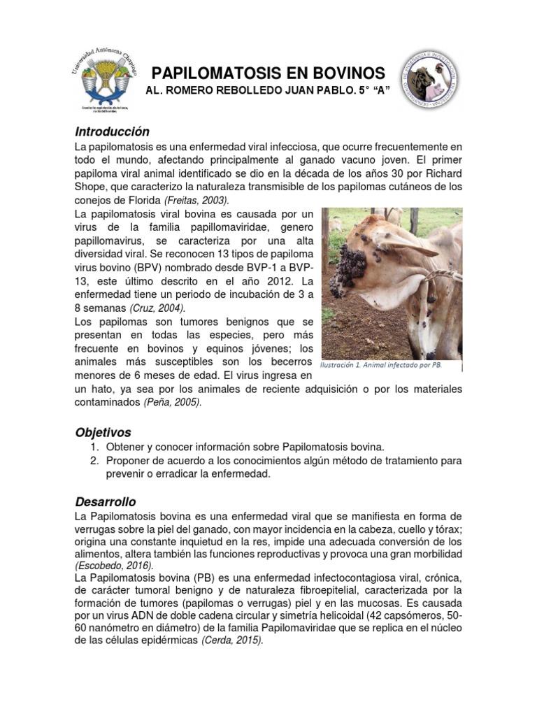Papilomatosis bovina tratamiento