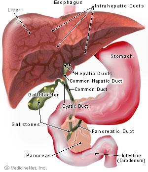 dezintoxicarea ficatului