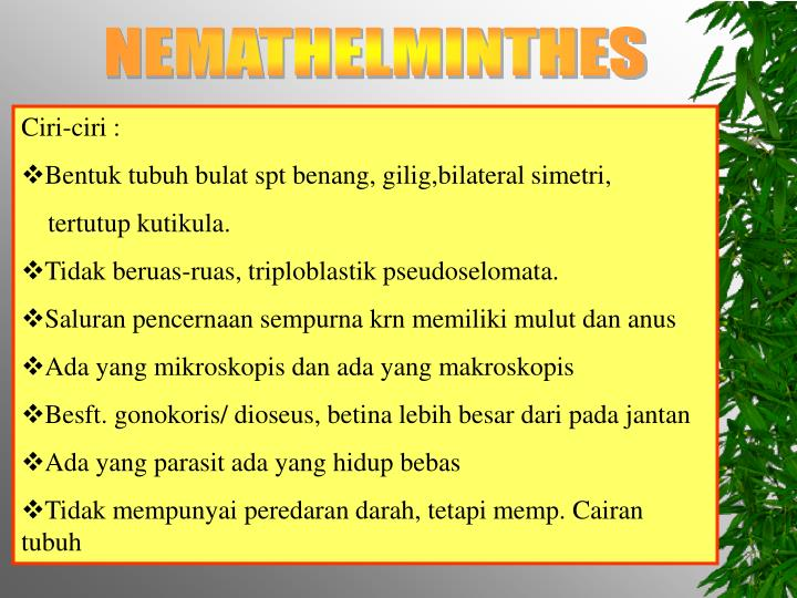 filum nemathelminthes ppt