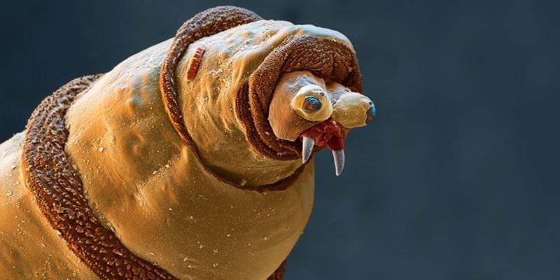 papilloma e parassiti