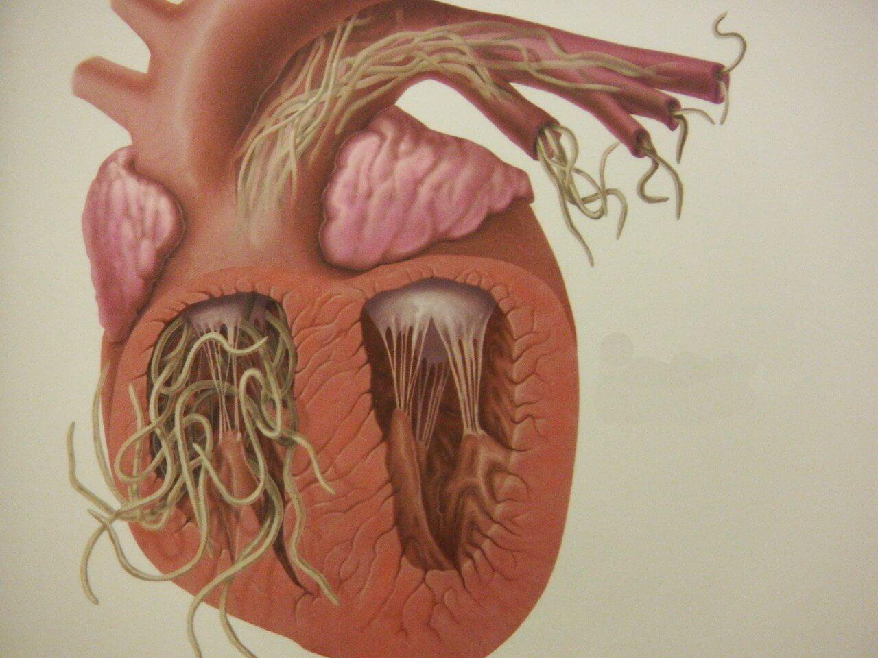 Paraziti s soda paraziti Crijevni paraziti kod pasa, Crijevni paraziti kod ljudi lijecenje