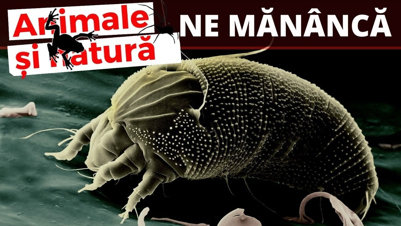 Aveți nevoie pentru a preveni viermii? retete pentru a scapa de viermi