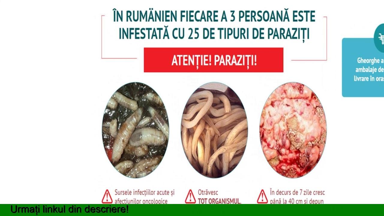 infecții cu viermi umani este tratat virusul papilomului?