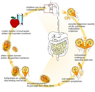 ce să mănânci din viermi metastatic cancer and lymph nodes