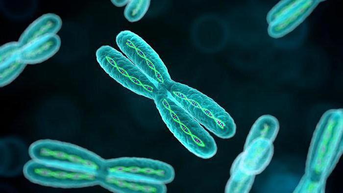Viermi de tot felul în cromozomii umani