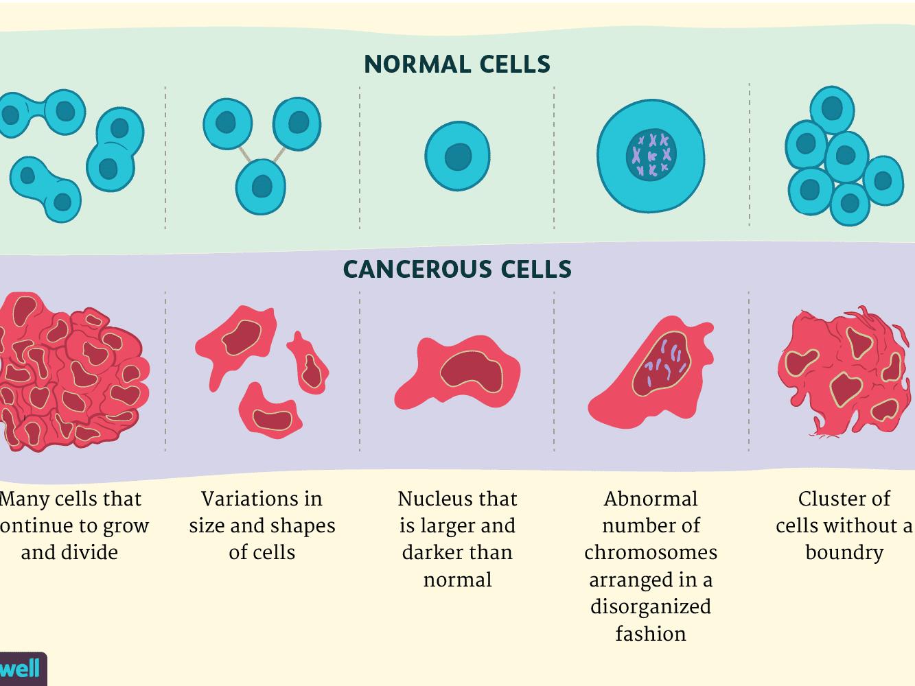benign cancer stem cells condiloame exofitice