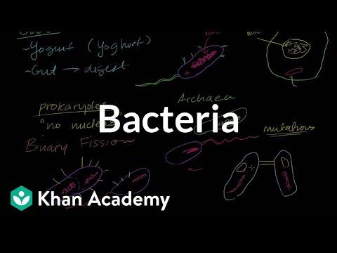 Enterocolita: cauze, simptome, diagnostic si tratament
