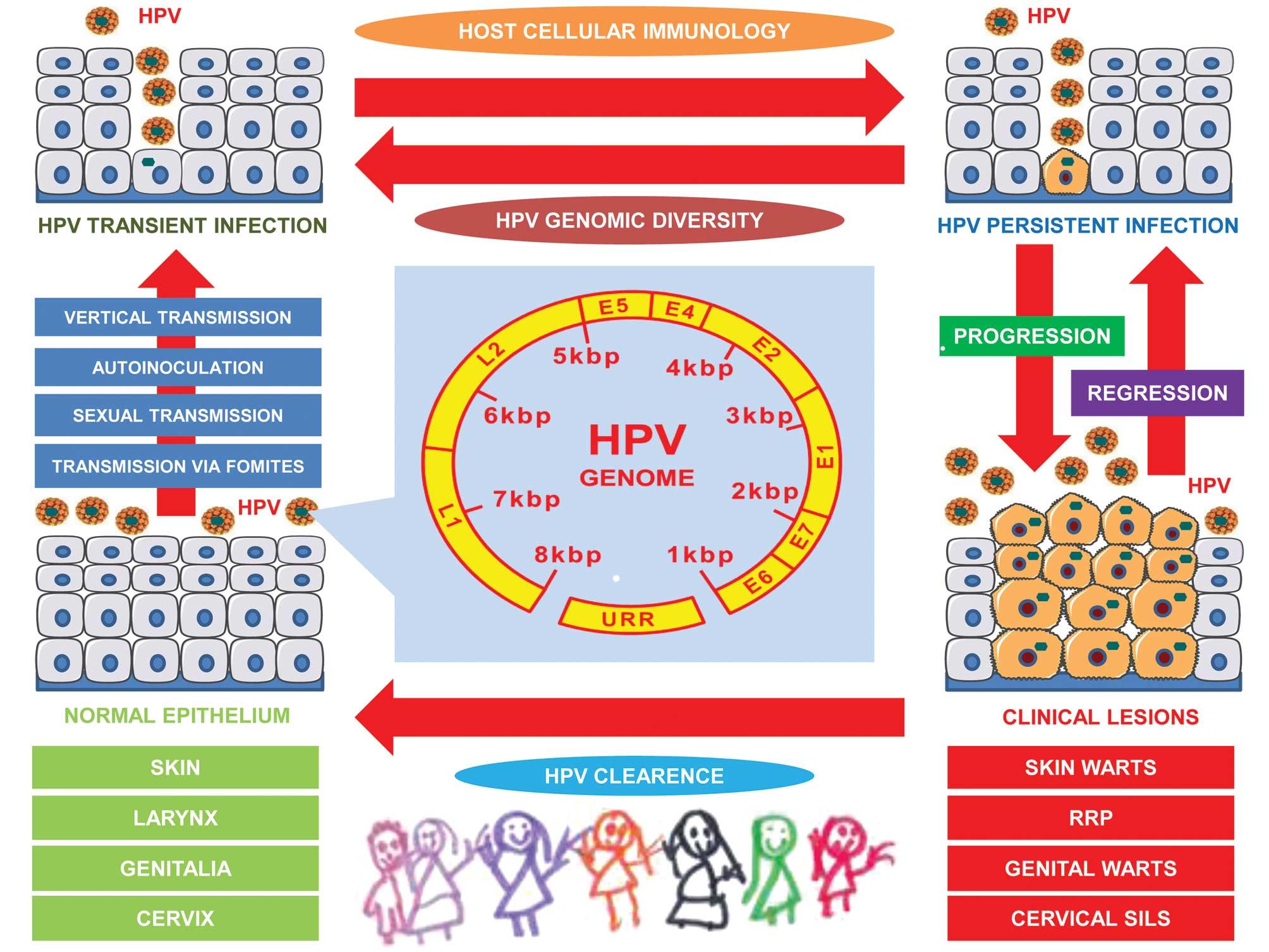 human papillomavirus in neonates negi cervicale și eroziune