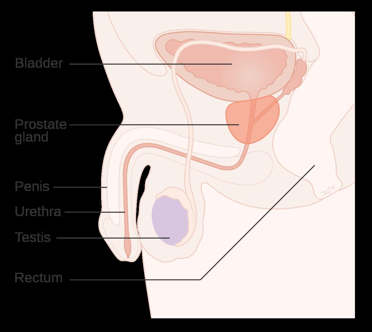 cáncer de próstata - Spaniolă-Română Dicţionar - Glosbe