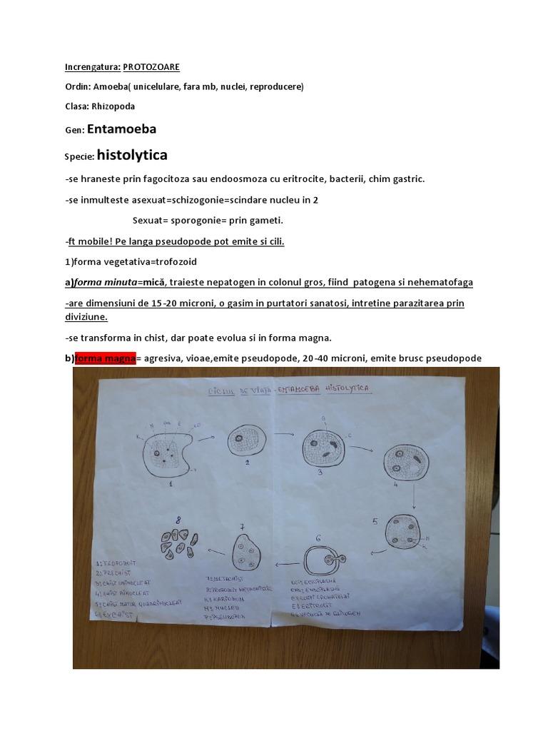 crema papiloma genital