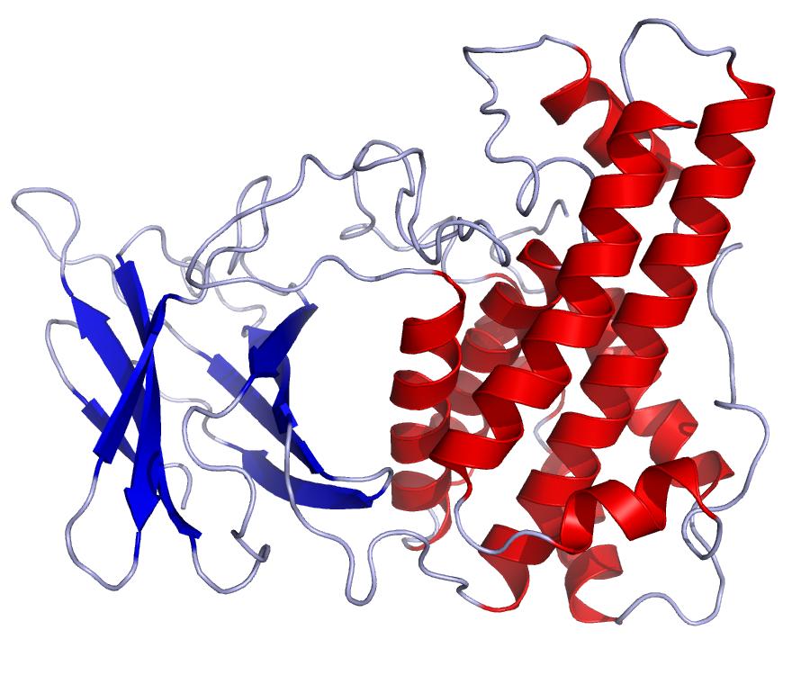 Clostridium difficile-toxine A/B - Synevo
