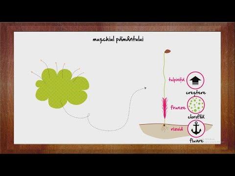 varză cu giardioză detoxifiere lamaie