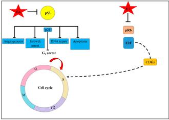 papillomavirus duree d incubation